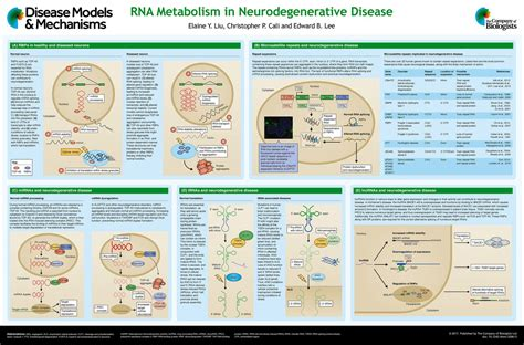 Image result for amyotrophic lateral sclerosis