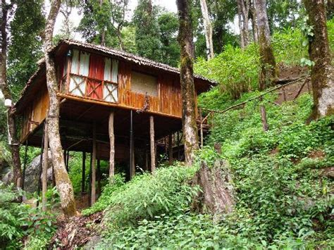 famous tree houses why stay home this summer zoomcar