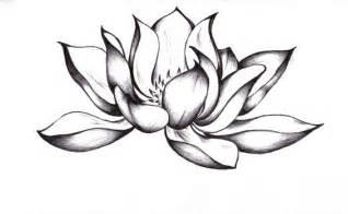 Lotus Flower Images Drawings Lotus Zeichnung Bilder Lotus Zeichnung Bild Und Foto