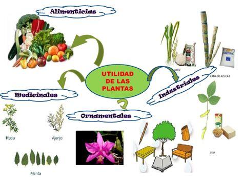 olguchiland las plantas ii cifras y letras las partes de la planta ii