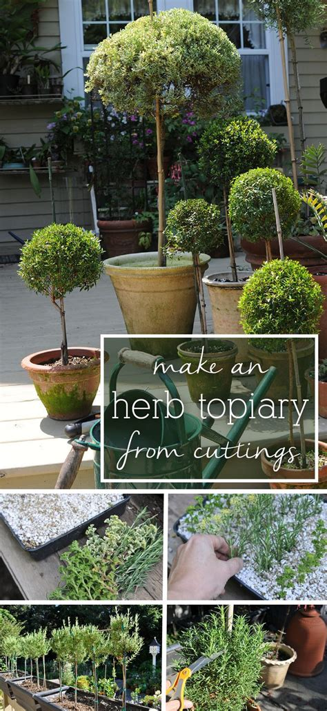 gardenia topiary tree how to make an herb topiary from cuttings scented