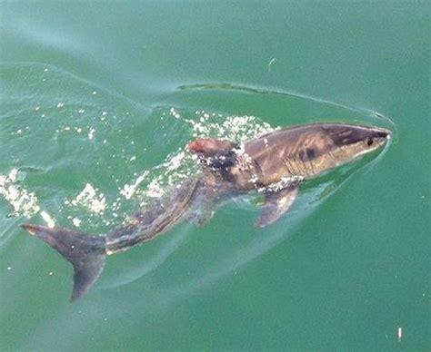 baby shark real life baby shark in real life hungry shark evolution