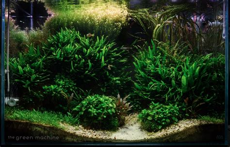 aquascape videos the green machine on twitter quot altitude aquascape by james findley more photos