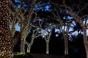 setting for tree with lights light wrapped trees garden ideas