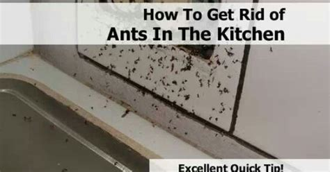 how to get rid of ants in the kitchen home
