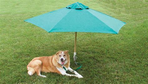 tie out stake petbrella pet umbrella tie out stake the green