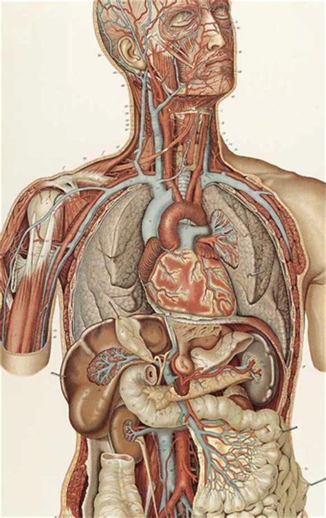 principes physiques irm cardiaque par neteditions