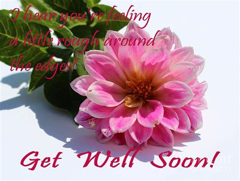 Get Well Flowers by Get Well Soon Louise Dahlia Pink Flower Photograph By