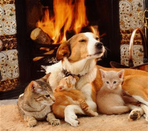 and cats by the fireplace cats animals background