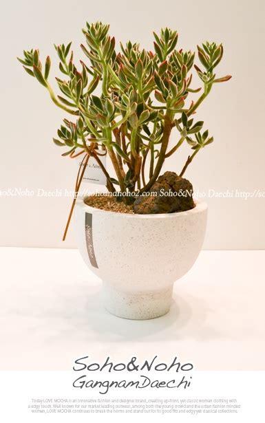 ba type1 jpeg 다육식물 부용키우기 부용관리법 네이버 블로그