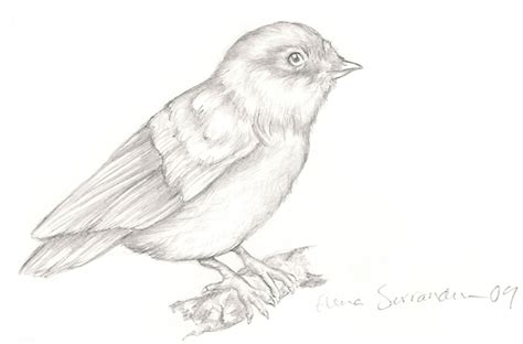 bird art drawing birds bird drawing by eleihna on