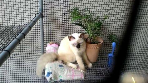 Kandang Kucing Pvc kandang kucing diy