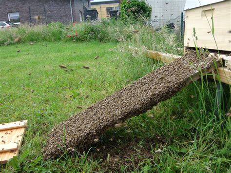 bienen halten im garten bienen im garten halten bienen im garten loswerden