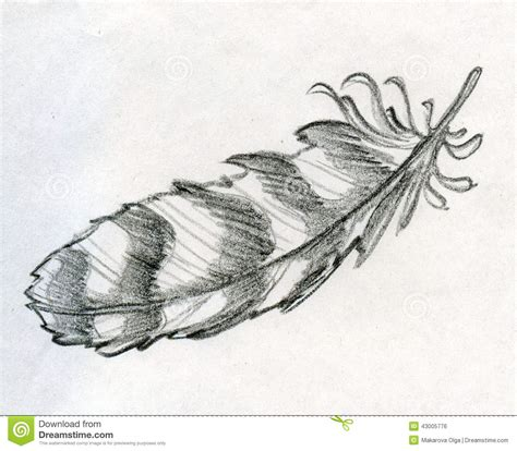 sketched eagle feather stock illustration image of retro