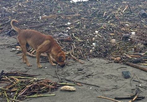 abandoned dogs animal lovers set out to help dogs abandoned during mexico