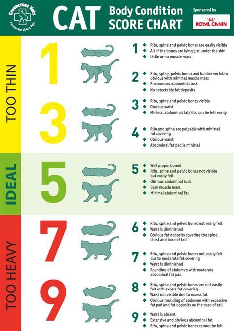 condition score cat condition score chart meow aum
