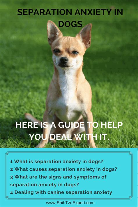 what to do about separation anxiety in shih tzu separation anxiety in dogs here is a guide to help you deal with it