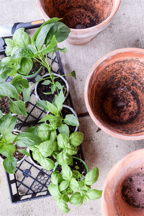 How To Start A Patio Herb And Vegetable Garden A What Do You Need To Start A Vegetable Garden