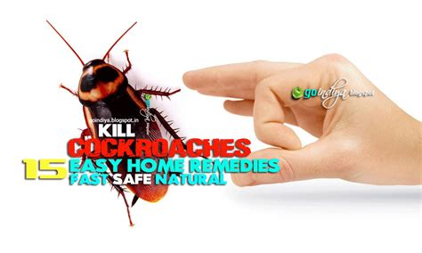 15 easy home remedies to get rid of cockroaches fast