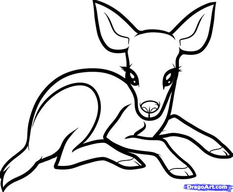 how to make doodle white tailed deer clipart baby pencil and in color