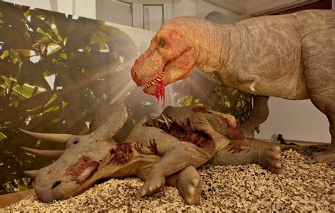 tyrannosaurus rex eating the gallery for gt tyrannosaurus rex eating triceratops