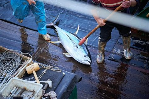 peru seafood fishing industry companies d j info notjusttuna supplied by thai union group to trusted