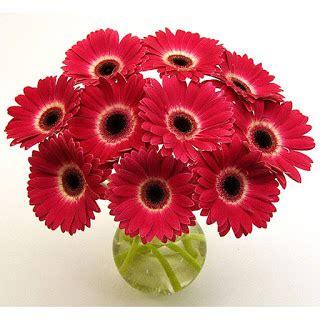 Buket Bunga Buket Doraemon L bunga gerbera tak mirip dengan bunga matahari