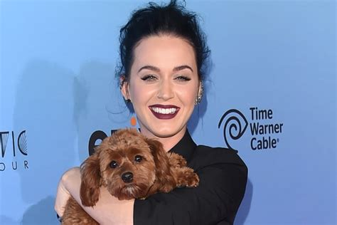 katy perry puppy katy perry s peed on spin