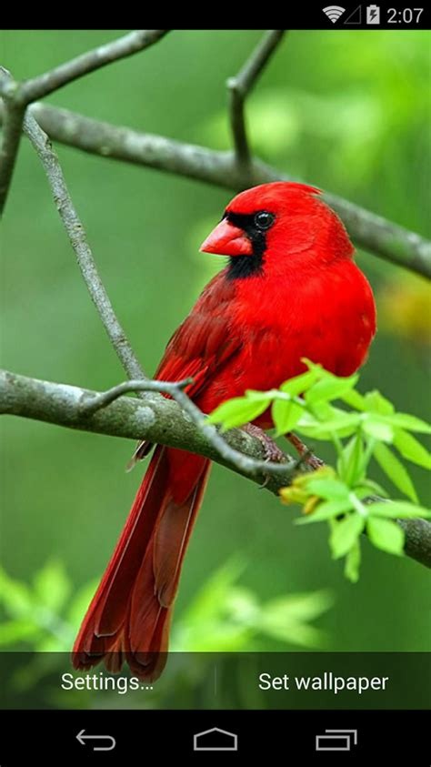 beautiful birds live wallpaper android apps on google play