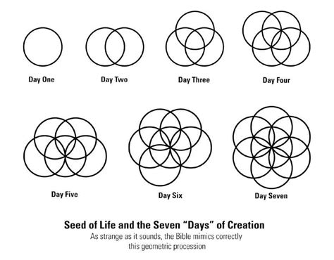 pattern of life meaning geometrically ordered design the everlasting fruit aeqai