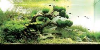 An Intermediate Guide to Aquascaping   Aquaec Tropical Fish