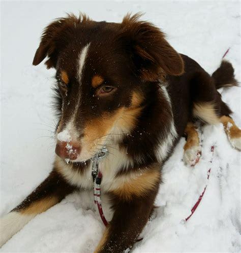 wann ist mein hund läufig infografik hunde im winter wann friert mein hund wirklich
