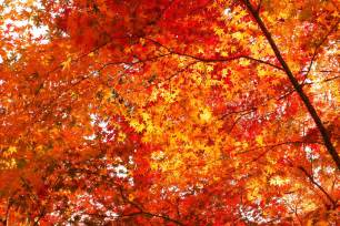 much more him the parable of the autumn leaves