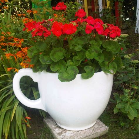 Tea Cup Planter Homeware Furniture And Gifts Mocha Large Teacup Planter
