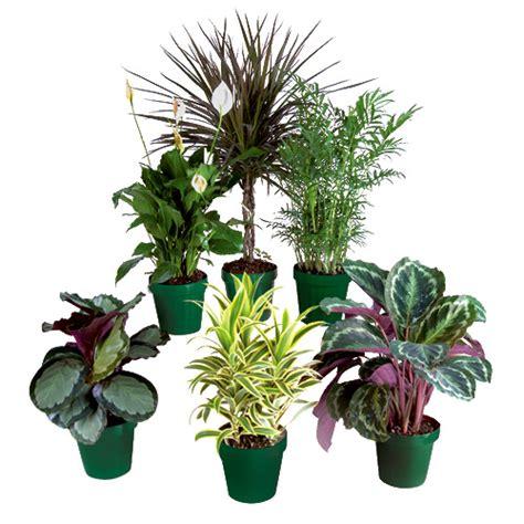 plantes tropicales premium rona