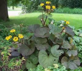 shade loving perennials the parsonage garden