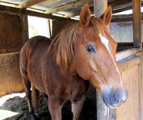 Sorrel Quarter Horse Stall Red · Free photo on Pixabay