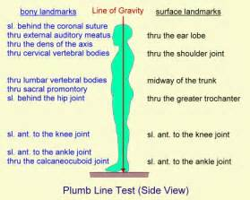Definition Plumb by Kinesiology Glossary