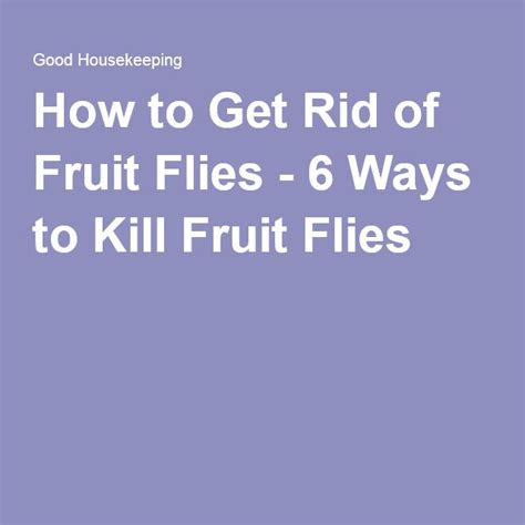 best way to get rid of flies in backyard 891 best images about fruit fly removal on pinterest