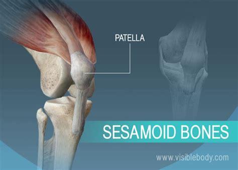 bone setter definition types of bones learn skeleton anatomy
