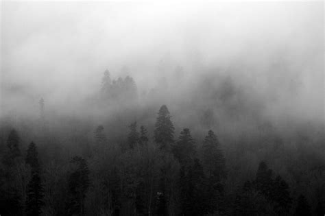 foggy s photo by photo foggy forest