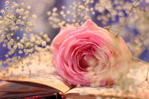 imagenes vintage en rosa im 225 genes vintage fondos de pantalla y mucho m 225 s