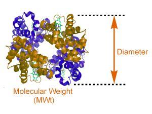 protein molecular weight calculator calctool protein size calculator
