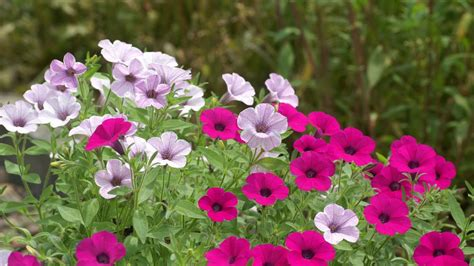 flowers plants flower hd wallpapers free download unique wallpapers