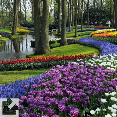 marino fiori marino fiori garden store rivoli torino la nostra