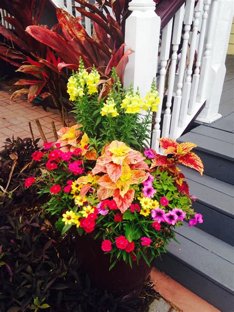 container gardening pdf st augustine hotel wins city award for best container gardens