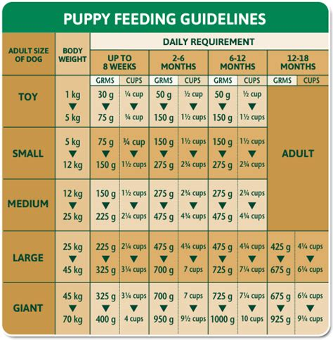 puppy water schedule puppy feeding schedule 18 weeks dogs our friends photo