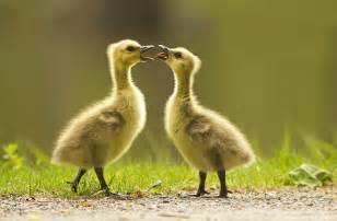 buy canada goose baby canada goose expedition parka