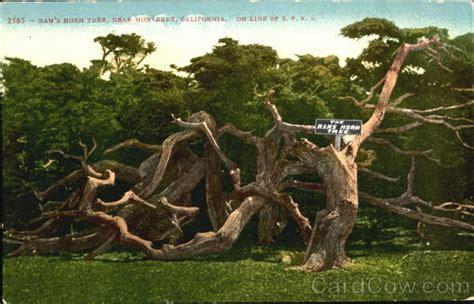 horn tree ram s horn tree monterey ca