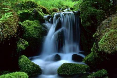 imagenes fuentes naturales de agua fuentes h 237 dricas un recurso para reforestar y conservar